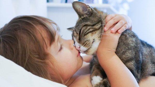 猫好きさんの性格を知ってお付き合いにつなげるコツとは